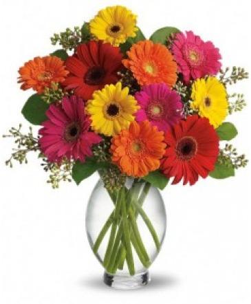Gerber Daisy Brights                   vased
