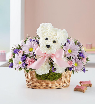 It's A Girl A-DOG-able New Baby Girl Flowers