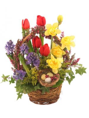 It's Finally Spring! Basket Arrangement in Brookfield, CT | FLOWERS BY WHISCONIER