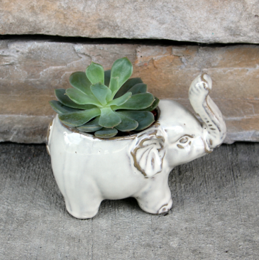 Ivory Beauty Succulent Planter