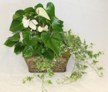 Ivy and Antherium Double Basket