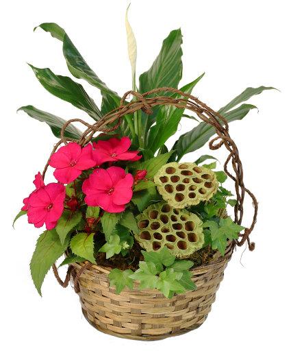 Ivy & Impatiens Flowering Plants
