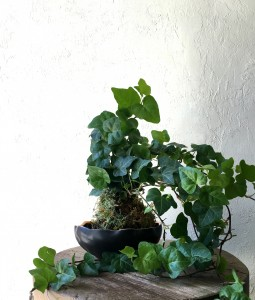 Ivy Kokedama in Alden Bowl