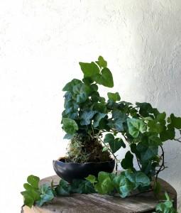 Ivy Kokedama in Alden Bowl