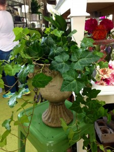 Ivy Plant in Stone Urn