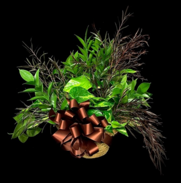 Ivy Plant Wicker Basket with Agonis