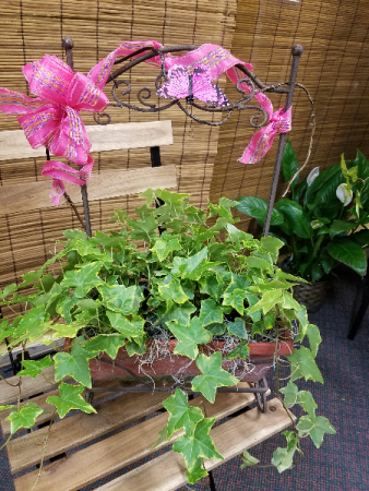 Ivy Terra Cotta Planter