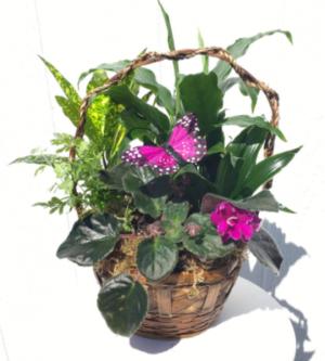 J  in Whittier, CA | Rosemantico Flowers
