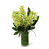 Jade Green Cymbidium Orchids