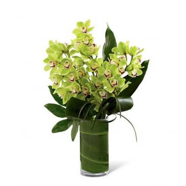 Jade Green Cymbidium Orchids