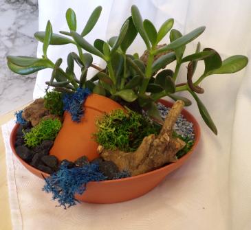 Jade planter