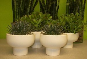 Jade Plants or Agave in Orion Compote Las Vegas Plant  in Las Vegas, NV | AN OCTOPUS'S GARDEN