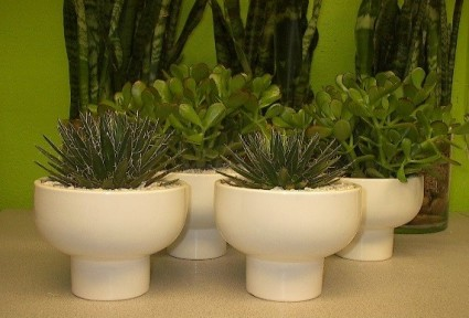 Jade Plants or Agave in Orion Compote Las Vegas Plant