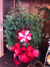Jasmine Wreath Plant