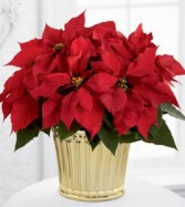 JOY  red poinsetta