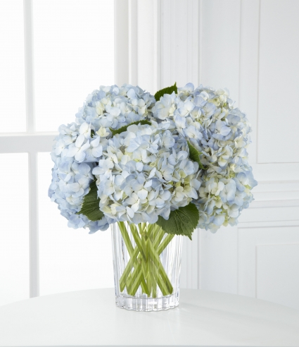 Cool Blue Blue Hydrangea in a Crystal Clear Vase