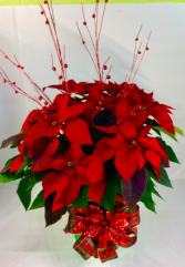 "Joyous ""Jingle"" Large Poinsettia"