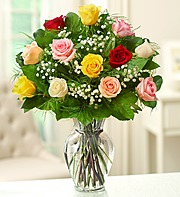 Dozen Mixed Rose ARRANGED Colors will vary. FILLER IS BABY'S BREATH OR WAX FLOWER