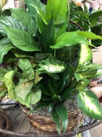 Jumbo planter