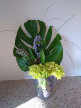 June Feature of the Month Show Casing Hyacinths