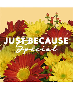 Just Because Special Designer's Choice in Stockbridge, MI | COUNTRY PETALS FLORAL & GIFTS, INC.
