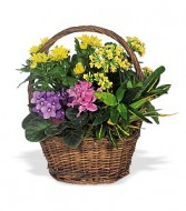 BLOOMING  GARDEN BASKET VARIETY OF PLANTS