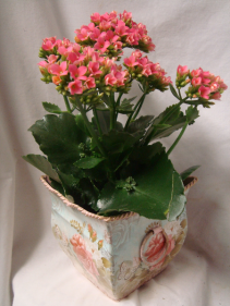 KALANCHOE IN A CUTE TIN CONTAINER!!