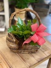 Kalanchoe in a Designer Basket