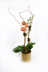 Kaleidescope Plant