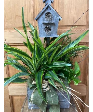 Keepsake Croton T&V Original