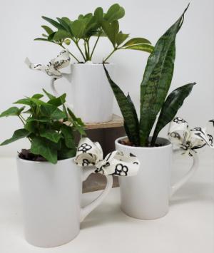 Keys to Success Plant Mug in Springfield, MO   FLOWERAMA #226