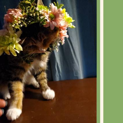 Kitten Crown Pet Couture