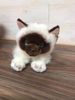 "Kitty Cat named ""Bella"" 10"" plush cat"