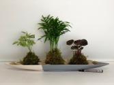 Kokedama Arrangement Moss and Plant arrangement
