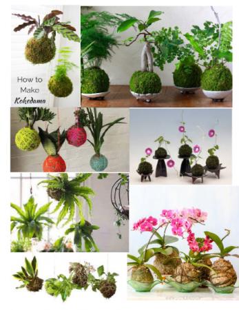 Kokedama Planter Plants