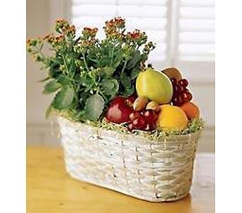 Kolanchoe Plant & Fruit