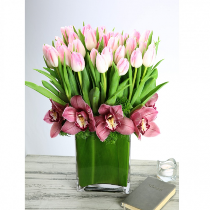 Hollands Tulip & Orchid Charmer