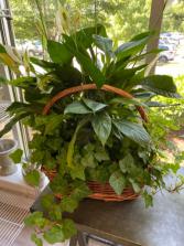 Large 2 Plant Basket