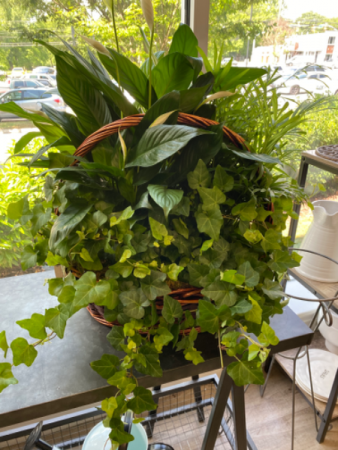 Large 3 Plant Basket