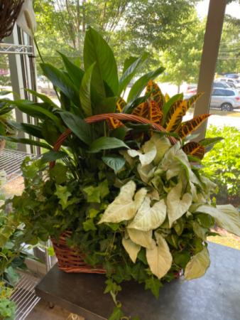 Large 4 Plant Basket