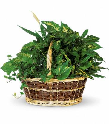Large Basket Garden
