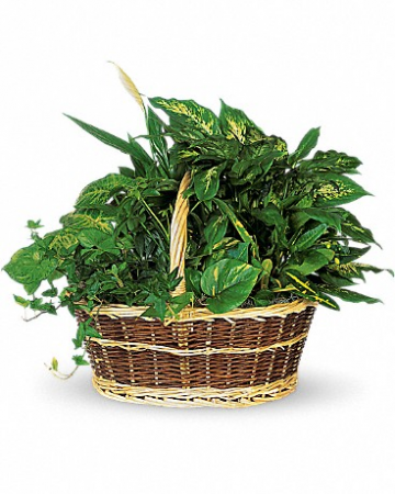 Large Basket Garden T212-1