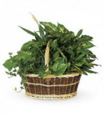 Large Basket Garden T212-1A