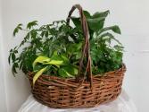 Large basket  Planter