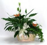 Large Blooming Garden Basket