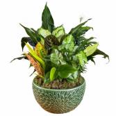 Large Ceramic Dish Garden  Plant