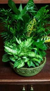 Large Ceramic Dishgarden PLANT