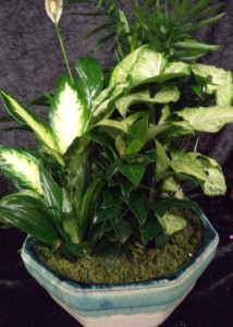 Ceramic Dish Garden Potted Plant in Port Huron, MI | CHRISTOPHER'S FLOWERS