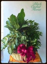 Large Combo Basket Plants