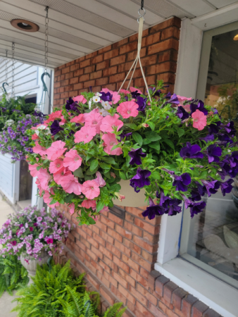 Large Combo Hanging Baskets Hanging Basket